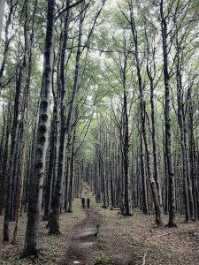 V objatí lesa, Strážov, Strážovské vrchy