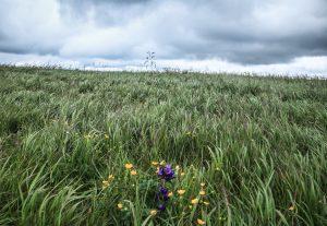 Veterno v tráve, Ploská, Veľká Fatra