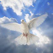 Anjel a diabol